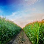 artykuły do produkcji rolnej