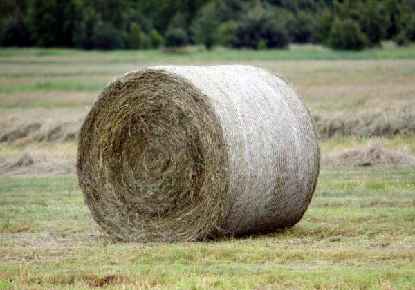siatka-rolnicza
